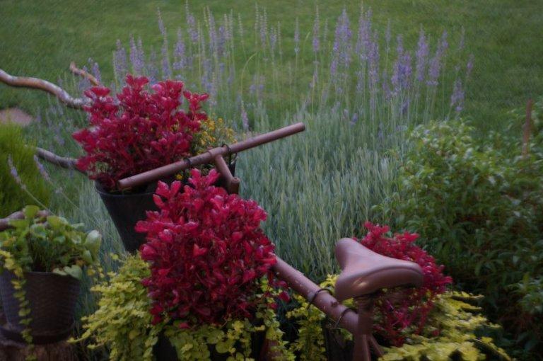 gyepápolás tavasszal
